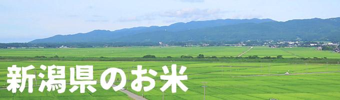 新潟県産カテゴリー